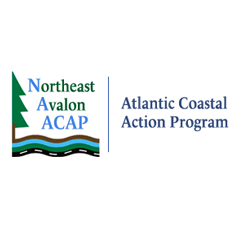 logo-acap-northeast